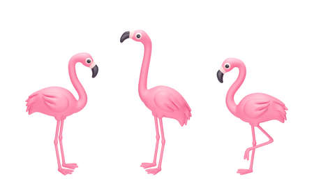 Set of cartoon pink flamingo isolated on white background. 3D rendering with clipping path 免版税图像