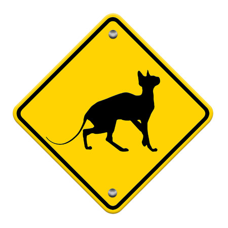 beware cat crossing traffic sign, part of a series photo