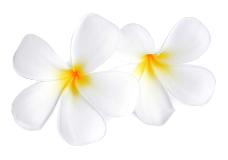 Tropical flowers frangipani  plumeria  isolated on white background photo