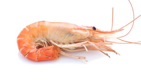 rosenbergii: Giant malaysian prawn isolated on white background