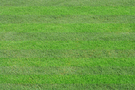 greensward background photography in nature, lawn Stock Photo