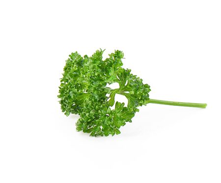 Parsley isolated on a white background, photography Stock Photo