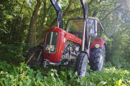 An old Massey Ferguson MF35 standing in a nature environment.