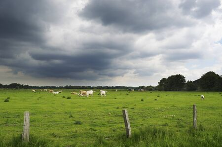 A pasture with cattle  Dark clouds are gathering in the sky  Stock Photo - 17859518