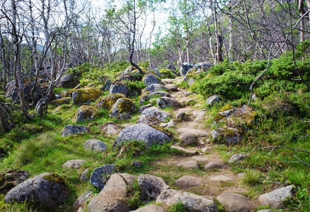 Small path into a birch forest in Jotunheimen national park in Norway