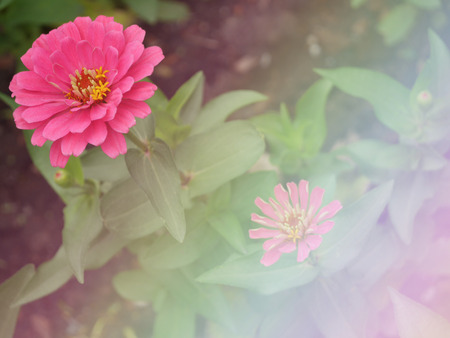 colorize: Pink flower background made with color filters. Stock Photo