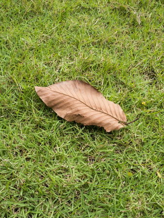 dry leaf: Dry leaf on the grass Stock Photo
