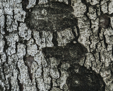 wood surface: Old wood surface texture  background  pattern Stock Photo