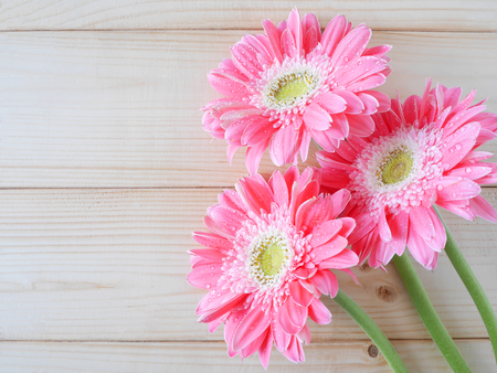 natural love: Pink flower on wood background, Love concept for Valentines Day