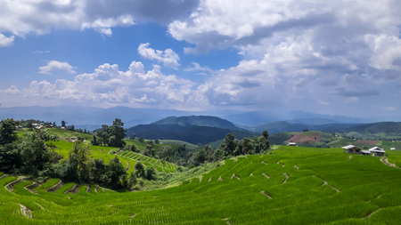 Beautiful landscape of white cloud and blue sky over the green paddy field  rice field fram in the afternoon at countryside in Chiangmai, Thailand