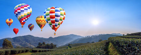 Panorama of  colorful hot air balloon fly over Landscape of tea farm with sun rise in the morning at Chiangrai, Thailand