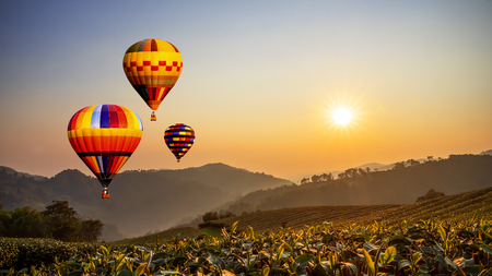 Colorful hot air balloon fly over Landscape of tea farm with sun rise in the morning at Chiangrai, Thailand with warm tone Stock Photo