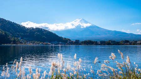 Landscape of Fuji Mountain and grass flowers beside lake in the morning at Kawaguchi Lake, Yamanashi, Japan 版權商用圖片