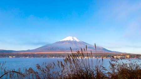 Landscape of Fuji Mountain and grass flowers beside lake in the morning at Yamanaka Lake, Yamanashi, Japan