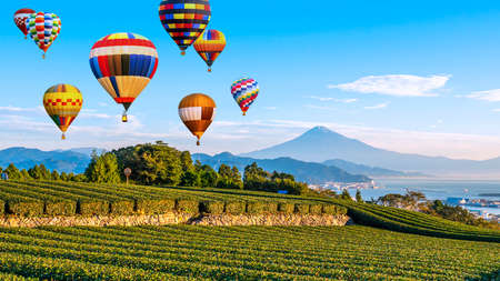 Landscape of Fuji Mountain and fresh green tea field with colorful hot air balloon at Nihondaira, Shizuoka, Japan 版權商用圖片