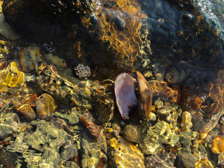 ebb: Mollusks and barnacle living on the stone art