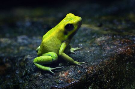 croaking: photograph of frog and worm