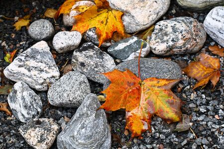 Maple leaves on the stones Stock Photo