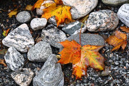descriptive: Maple leaves on the stones Stock Photo