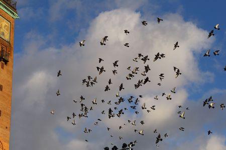 Flying doves, Copenhagen Stock Photo