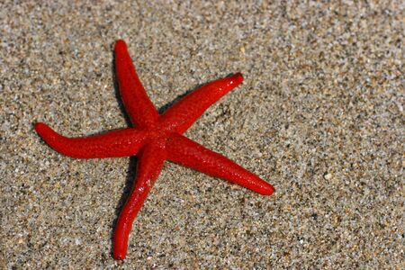 Live starfish, just from the sea