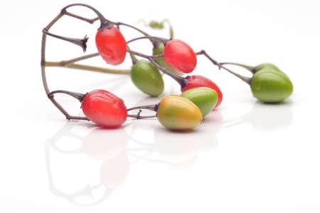 nightshade: Coloured berry nightshade