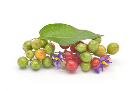 nightshade: Colored berry nightshade