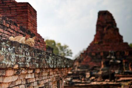 Cat in the Wat Phra Phai Luang  photo