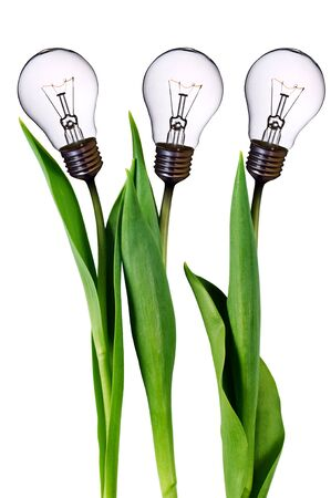 electricity background: lamp bulb tulips  Stock Photo