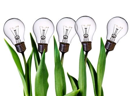 lamp bulb tulips   Stock fotó