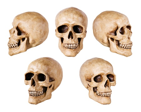 skeleton skull: synthetical skull many angle view   Stock Photo