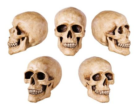 synthetische Schädel viele Winkel Ansicht