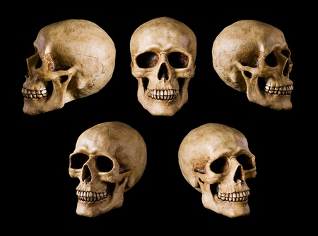 skull background: synthetical skull many angle view
