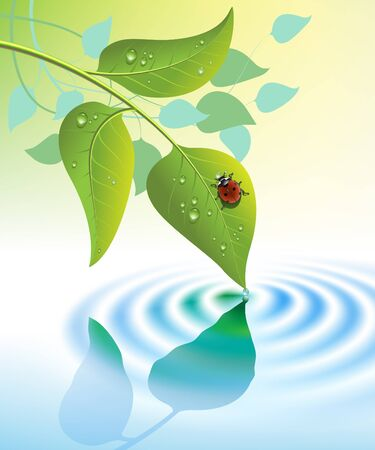 reflection of life: water ripple and green leaves with ladybug