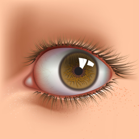 oeil gros plan: oeil humain ouvert close up Illustration