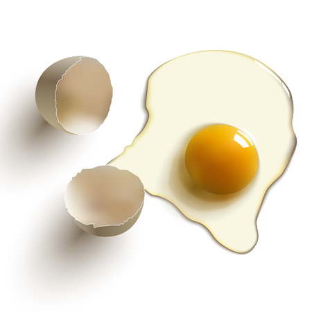 chicken and egg: cracked raw egg, shell, yolk and albumen