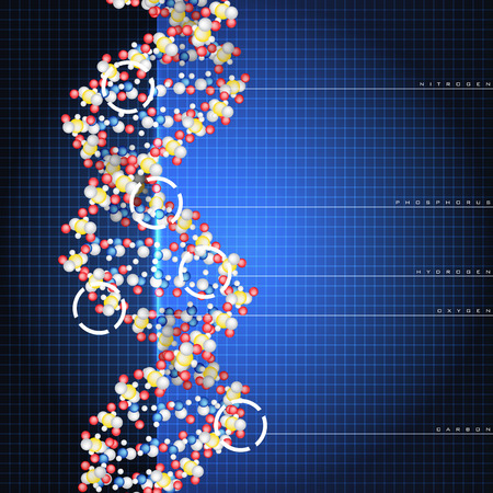 Dna double helix molecules and chromosomes Vector