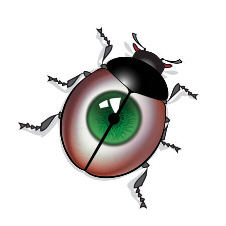 eye green: Bug con la impresi�n de ojos verdes en el caparaz�n Vectores