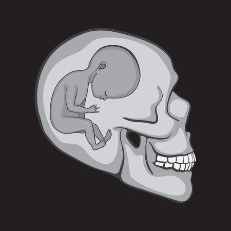 innen: F�tus in der Human Skull