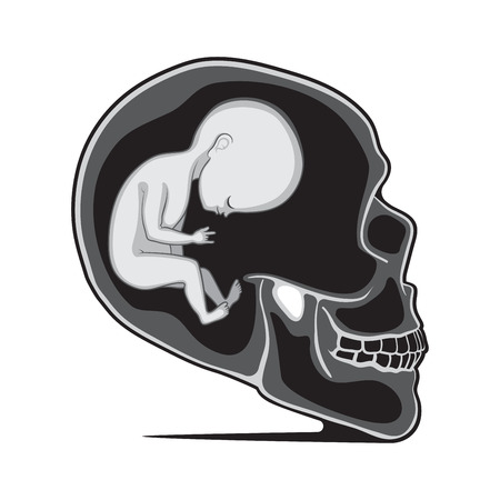 womb: Fetus Inside of the Human Skull