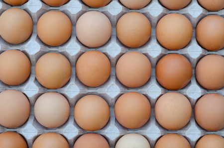 carton: large group of eggs in a cardboard tray