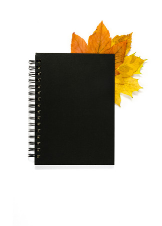 yellow maple leaves protruding from a corner of a closed notebook photo