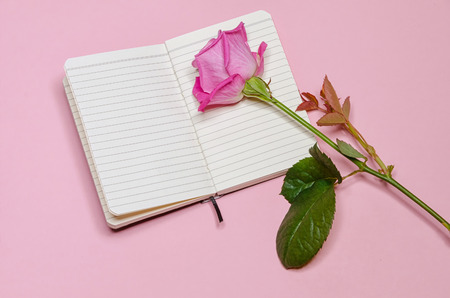pink and lilac rose on a blank page of a notebook