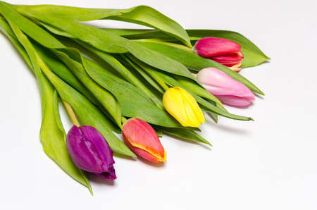 a colorful tulip bouquet on white background photo