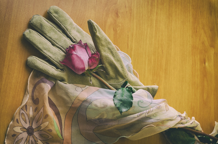 an overview of a rose lying on an elegant female glove Stock Photo