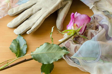 enveloping: pastel veil enveloping a female glove and a rose