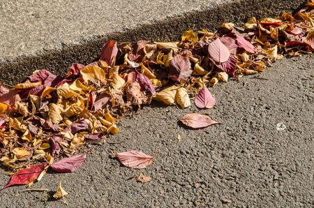 sun lit: close-up of sun lit pile of colorful autumn leaves on the ground at the curb