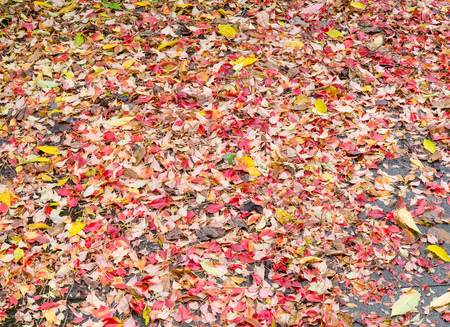 gritty: very large background of many fallen wet colorful autumn leaves on a gritty and grungy surface after rain