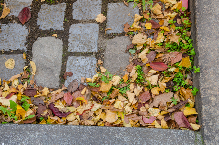 curb: pile of autumn leaves in the corner of a stone street curb Stock Photo