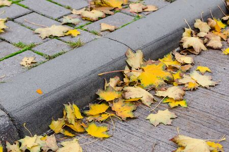 curb: yellow autumn foliage at the stone curb of a street